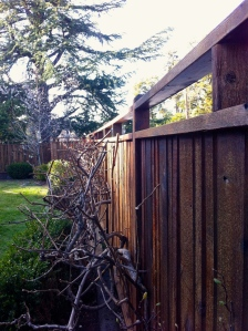 Fence Rehab - 335 feet of 18 year-old fence.  Mended, power-washed, stained.