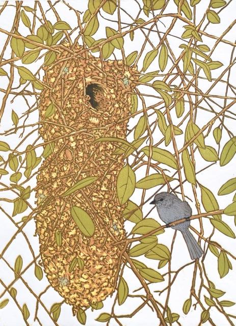 Bushtits Nest_5