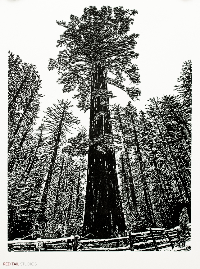 "Sequoiadendron giganteum - Yosemite, 24"" x 18"", Fine Art Linocut Print, Limited Edition of 26"